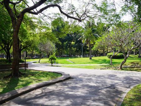 常夏の公園を歩いた台北の風景