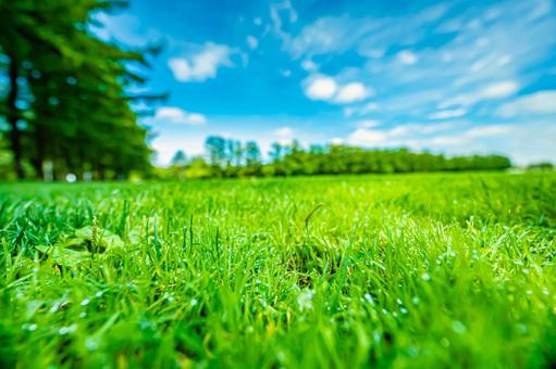 Park trees and lush grass All 6 types (3) Search word / turf Creator name / YUTO @ PHOTOGRAPHER
