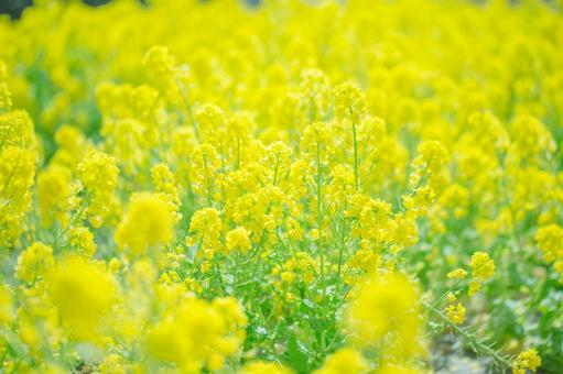 Fantastic flowers 181