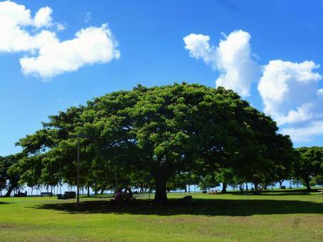 Hawaii Landscape (28) Ala Moana Beach Park