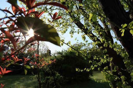 광망의 나뭇잎