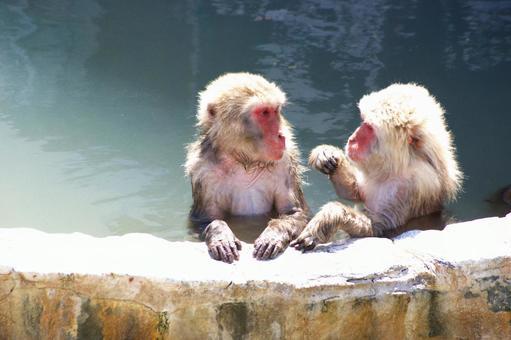 日本的猴子喜歡溫泉