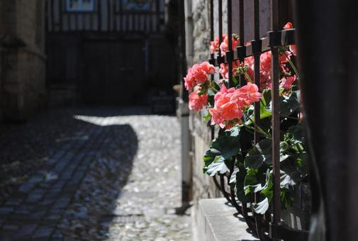 Alley flowers