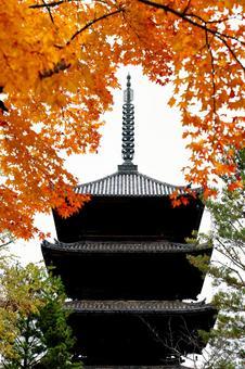 kyoto Autumn leaves in Kyoto Ninnaji Temple