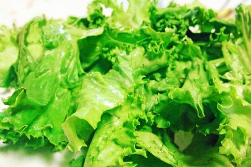 Lettuce # 2