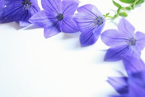 Kikyo Futoshi Kikyo's Botanical Frame Purple Flower