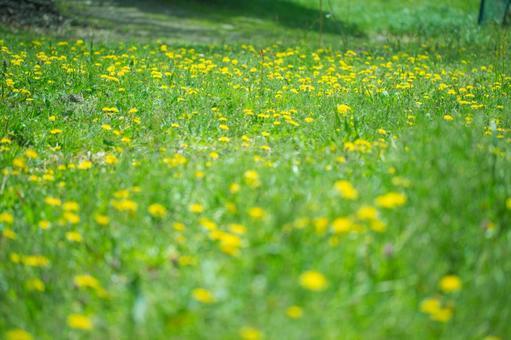 Clean flower garden 3