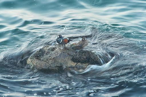 Dive Turnover