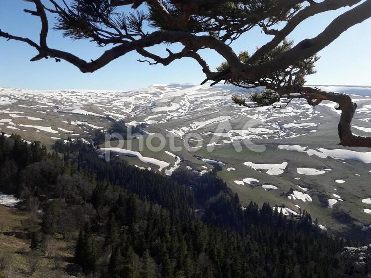谷に積もってる雪と松の写真