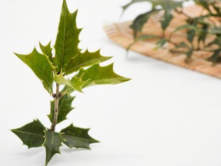 트게 히 이라기의 잎