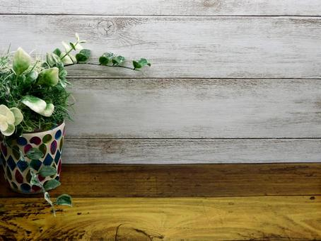 Houseplants on a white wood background and vase