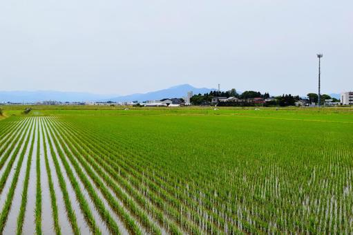 Rural scenery Shonai Plain, Yamagata Prefecture