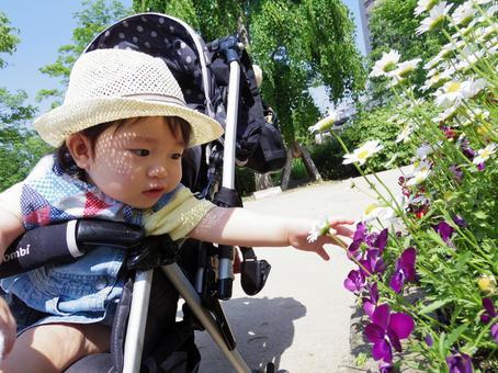 野花和宝贝1
