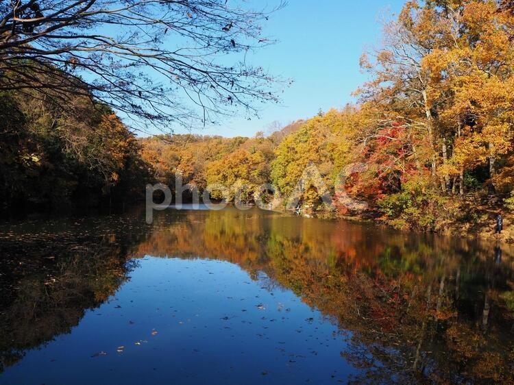 秋の震生湖の写真