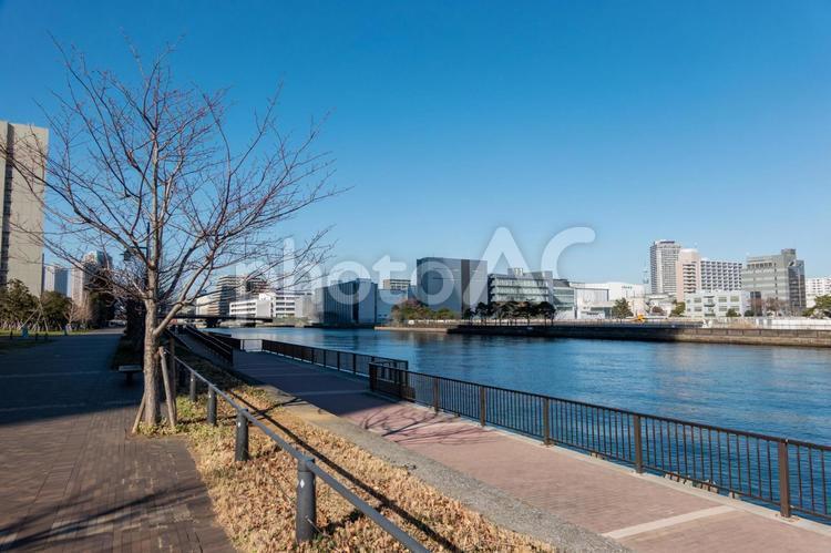 豊洲運河の写真