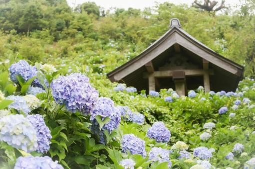 Mamenbara Plateau Temple and Hydrangea Flowers