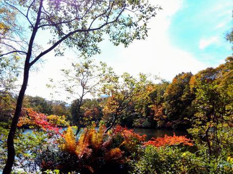 Autumn leaves · Myoko Sennin leaves and sky of the pond