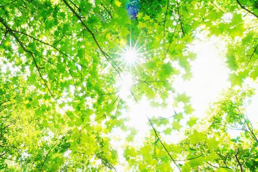 Forest green background (Komorebi) 0625