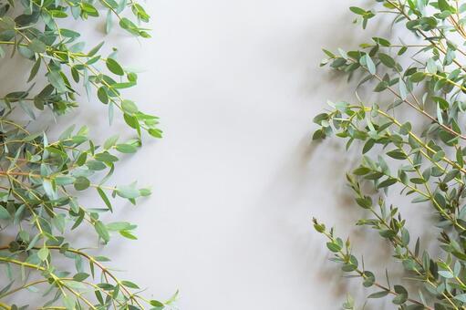 [Text space] Eucalyptus a