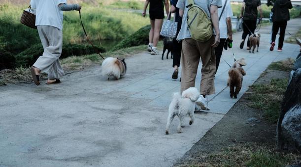 Dog walking pet