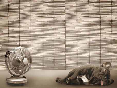 Summer heat dog