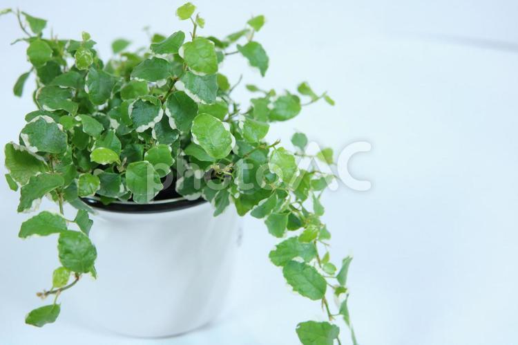 観葉植物 やすらぎのひとときの写真