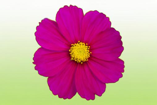 Cosmos clipping. Gradation background