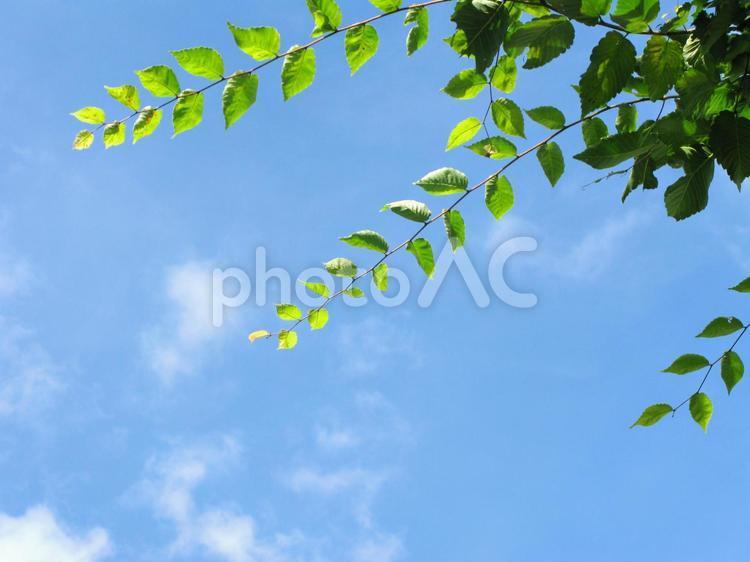 木陰と青空1の写真