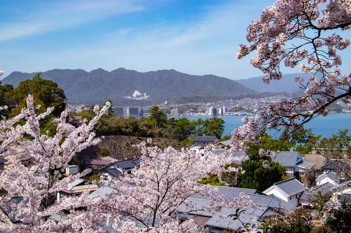 미야지마의 벚꽃과 거리