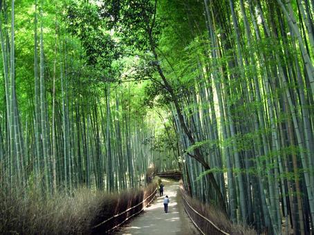 Sagano bamboo grove Kyoto Arashiyama