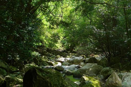 森林Kirazu