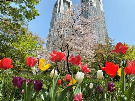 Spring when tulips are in full bloom and Tokyo Metropolitan Government Building