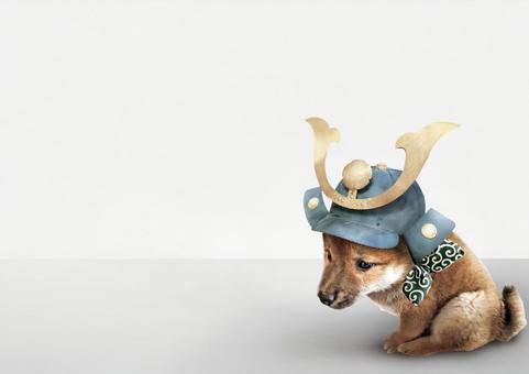 Helmet wearing puppy Psd cutout