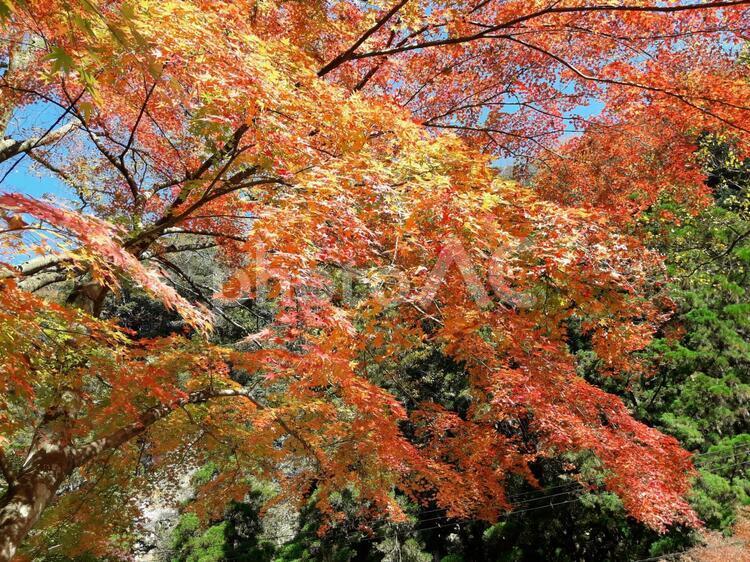 高千穂の紅葉の写真