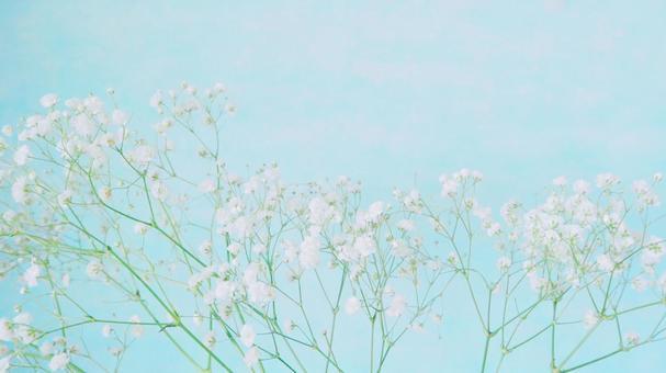부드러운 안개 잔디 2 민트 블루 16 : 9