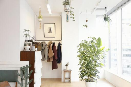 Plant and fashionable room 1