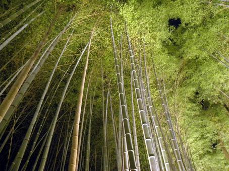 Fantastic bamboo grove lit up