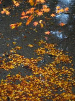 Autumn leaves sink