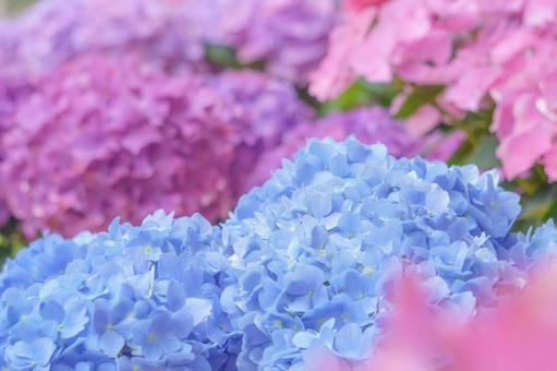 柔和的繡球花背景