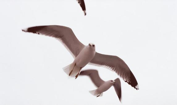 Turkish townscape gulls