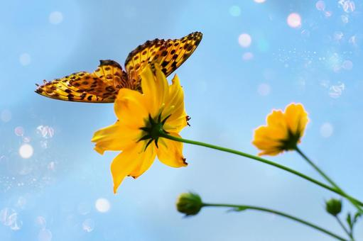 Cosmos, sky and butterflies