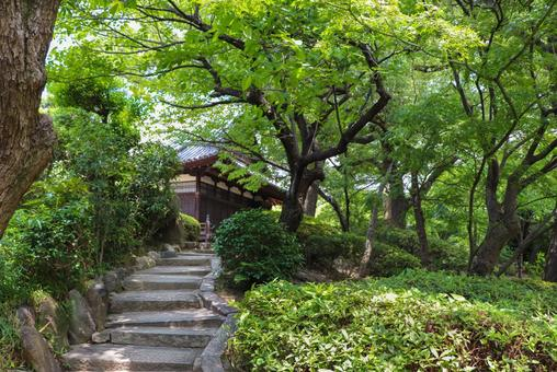 綠色花園小徑和古老的日本建築