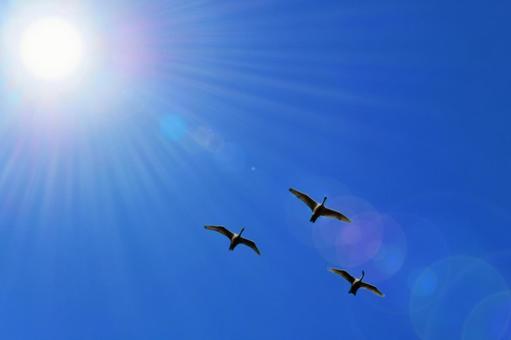 하늘 햇빛과 철새