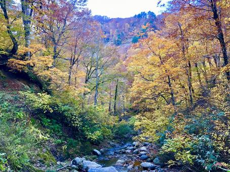Autumn canyon