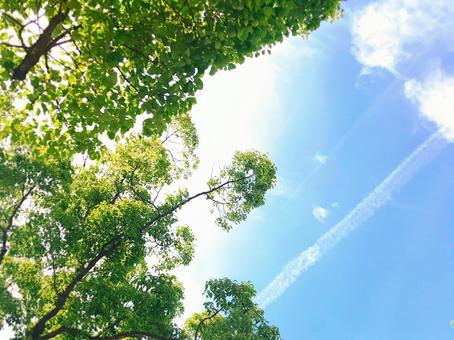 Healing sky Fresh green and dazzling light