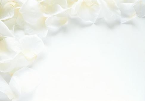White petals (4)