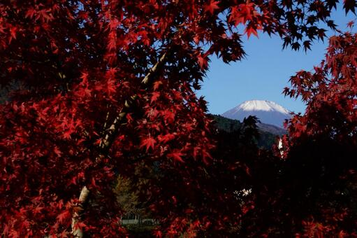 Mt. Fuji and autumn leaves seen from the shore of Lake Tanzawa