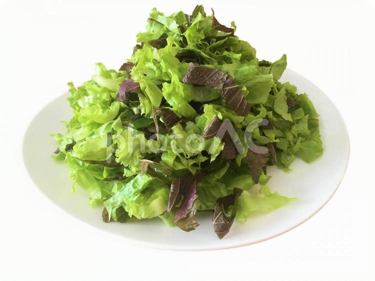 野菜(白背景)の写真