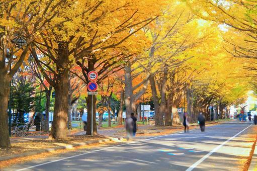 Hokkaido University Gingko Nam