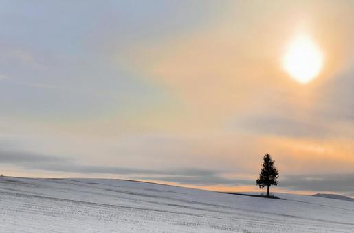 Biei · sunset tree and sunset